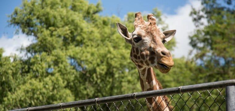 dierentuin open corona sneltest